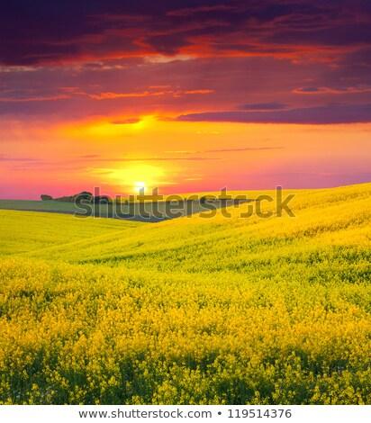 íny · fa · vidéki · farm · vidék · kosz - stock fotó © lovleah