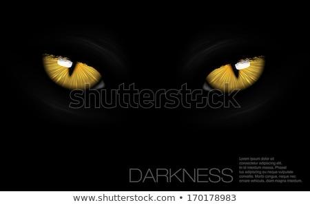 yellow cat eyes Stock photo © romvo