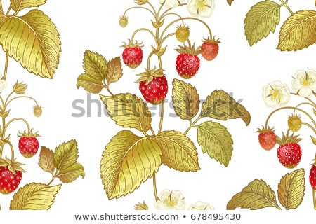 Strawberry in vintage style. Colored vector illustration Stock photo © ConceptCafe