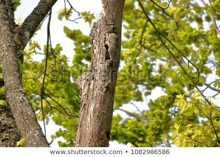 樹皮 ニレ ツリー テクスチャ 木材 ストックフォト © tepic