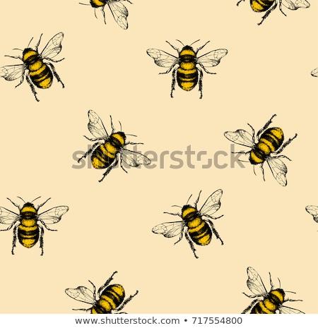 手描き いたずら書き 蜂 パターン ベクトル 紙 ストックフォト © balasoiu
