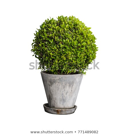 a big pot with a flowering plant stock photo © bluering