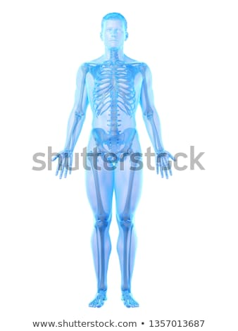 3d rendering skeleton of the man with the backache Stock photo © maya2008