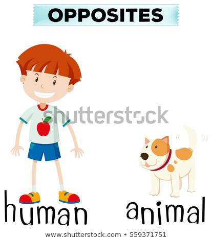 Opposite words for human and animal Stock photo © bluering