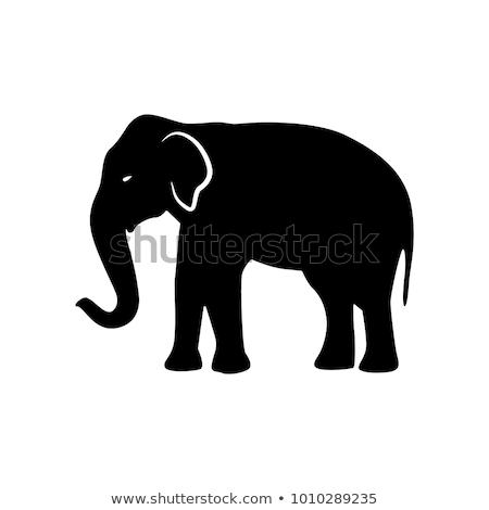 vektor · indiai · elefánt · kézzel · rajzolt · firka · törzsi - stock fotó © lirch