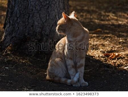 seated orange cat looks to side Stock photo © feedough