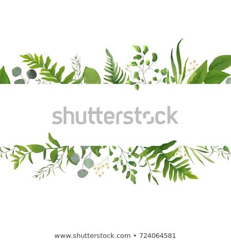 Yeşil yaprakları çerçeve güvenlik yeşil plaka bitki Stok fotoğraf © rufous
