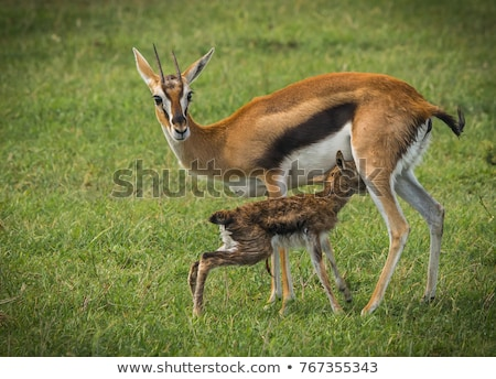 Savane Afrique animaux nature faune Homme Photo stock © dolgachov