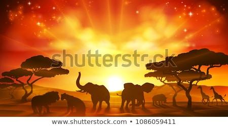 African Safari Tier Savanne Silhouette Szene Stock foto © Krisdog