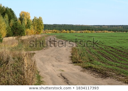 Road near field of winter crop Stock photo © Givaga