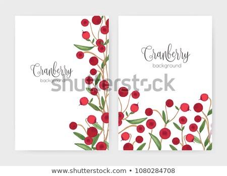 Red Cranberry Border Poster Stock photo © adamson