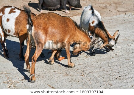 summer mountain farmyard Stock photo © wildman