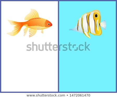 蝶 金 魚 カラフル ポスター 文字 ストックフォト © robuart