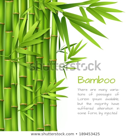 a panda on bamboo frame stock photo © bluering