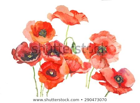 vermelho · branco · projeto · folha · fundo - foto stock © liolle
