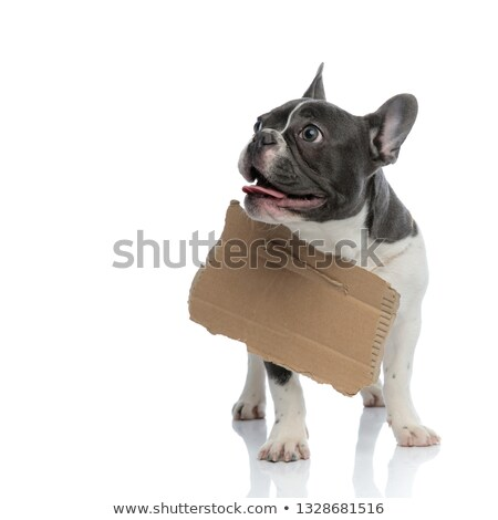 french bulldog with carton board on his neck Stock photo © feedough