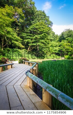 Jardim parque Tóquio Japão madeira Foto stock © daboost