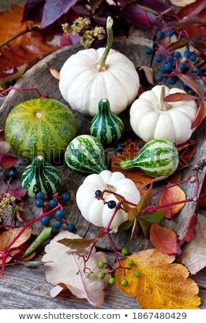 mini · sütőtök · őszi · levelek · fehér · háttér · levelek - stock fotó © melnyk