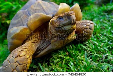szemtől · szembe · teknősbéka · mikulás · sziget · tájkép · állat - stock fotó © maridav