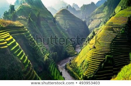 Terraced rice field in Sapa Stock photo © bloodua