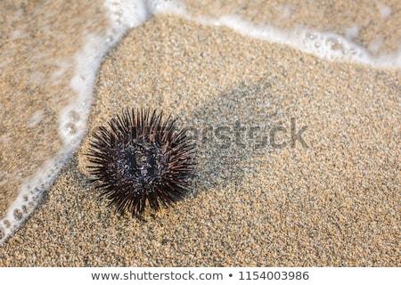 Tenger sündisznó víz természet óceán csoport Stock fotó © pressmaster
