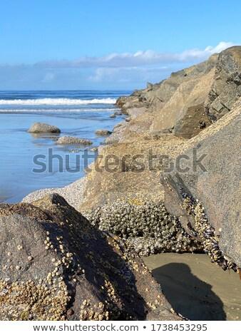 волна · закат · пастельный · солнце · пейзаж · морем - Сток-фото © morrbyte