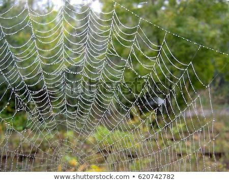 Spider Web Covered with Sparkling Dew Drops Stock photo © Frankljr