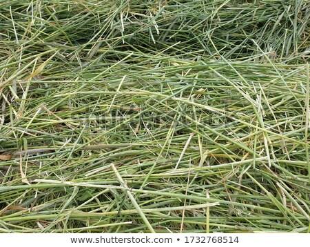 Zöld nyár fű textúra közelkép absztrakt Stock fotó © latent
