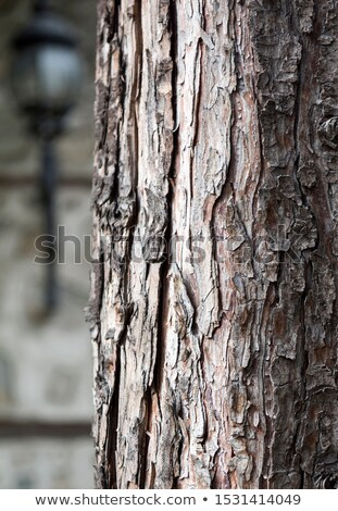Metal · sepet · yakacak · odun · yalıtılmış · beyaz · ağaç - stok fotoğraf © backyardproductions