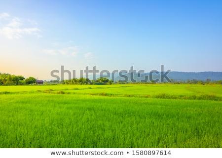 Zöld levél kék víz absztrakt közelkép égbolt Stock fotó © boroda