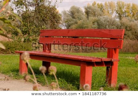 Rojo banco árbol amarillo hojas Foto stock © ildi