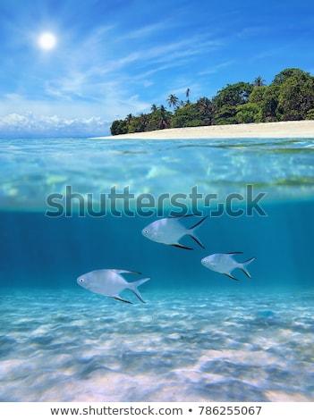 подводного пляж Тропический остров пейзаж морем лет Сток-фото © ajlber