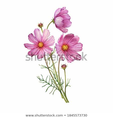 bloem · abstract · gekleurd · bloemblaadjes · grunge · steeg - stockfoto © perysty