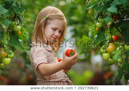 Lovely girl in hothouse with tomato plants Stock photo © Aikon