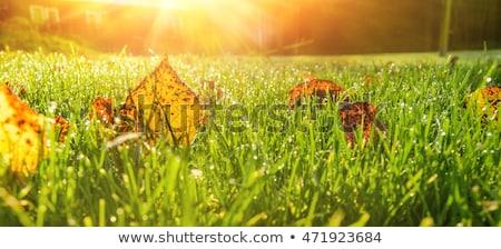 秋 芝生 草 葉 背景 フィールド ストックフォト © Alegria111