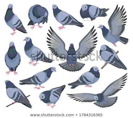 飛行 グレー 青空 自然 青 ストックフォト © ryhor