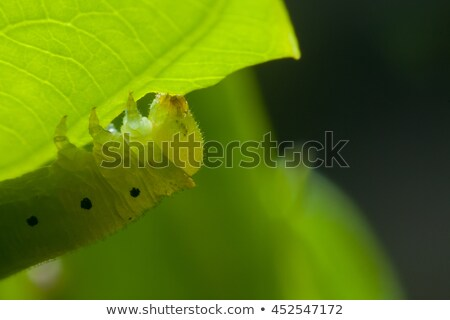 Caterpillar on green leaf Stock photo © Kirill_M