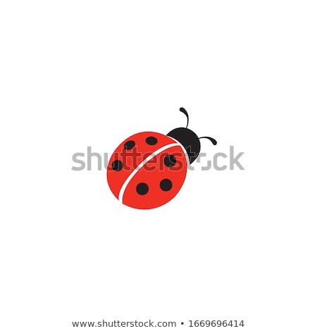 черный красный Ladybug икона иллюстрация изолированный Сток-фото © cidepix