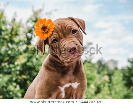 Feliz pequeño cute perro corazón diseno Foto stock © balasoiu