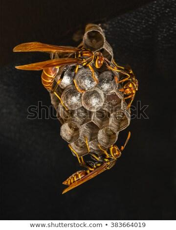 ワスプ · 巣 · テクスチャ · 空っぽ · 背景 - ストックフォト © tobkatrina