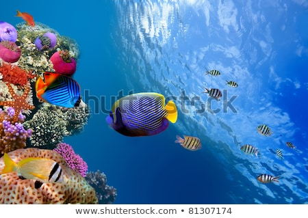 Raro peces subacuático mundo mar rojo mar Foto stock © OleksandrO