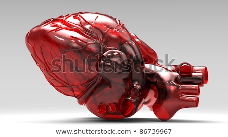 Healthy heart human Stock Photos, Stock Images and Vectors
