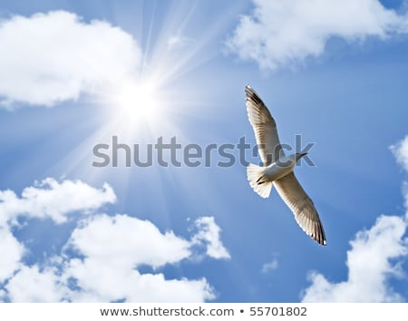 seagull soaring in the blue sky Stock photo © Pavlyuk