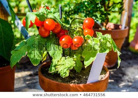 Plant Pot Marker Stock photo © naffarts