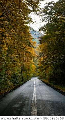 Wonderful autumn lane in the forest. Stock photo © lypnyk2