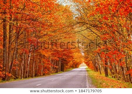 Alder trees in a row Stock photo © olandsfokus