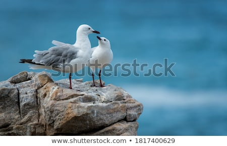 Stock photo: Pair of Seagulls