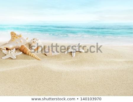 Homokos tengerpart tenger kagylók homok háttér keret Stock fotó © stoonn