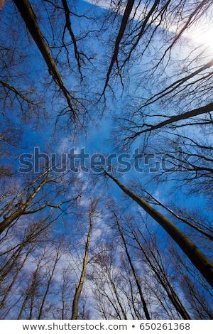 autumn tree top on blue sky stock photo © artush