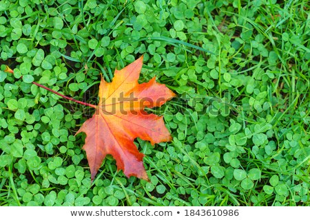 Wet Bed of Fallen Autumn Leaves on the Ground Stock photo © ozgur
